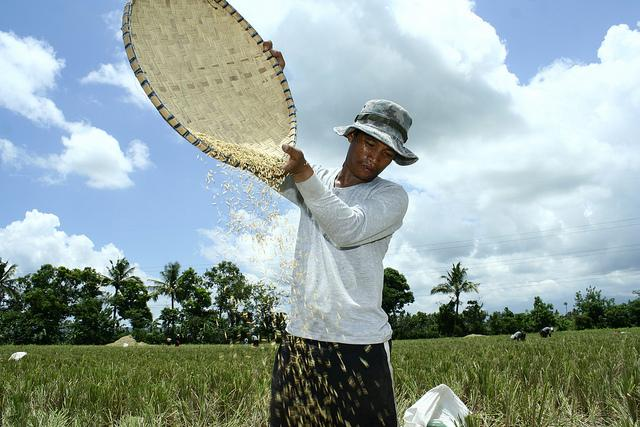 Man scattering rice grains. Sta. Cruz, Laguna, Philippines. Photo: Danilo Pinzon / World Bank